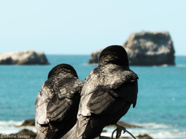 Black Birds in Love