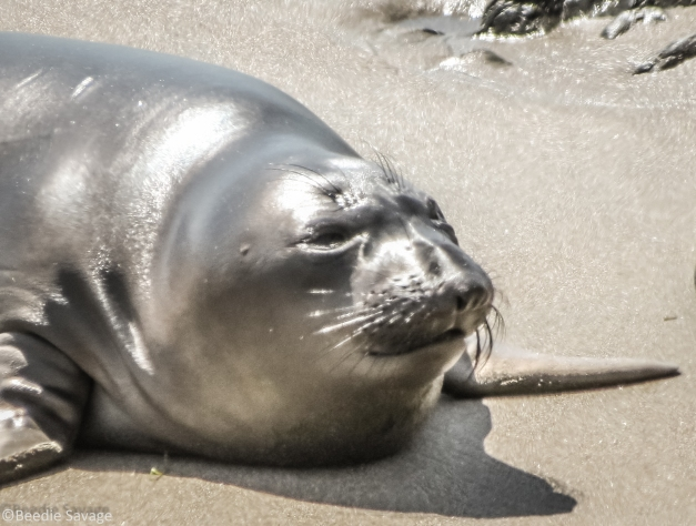 Seal out of Water