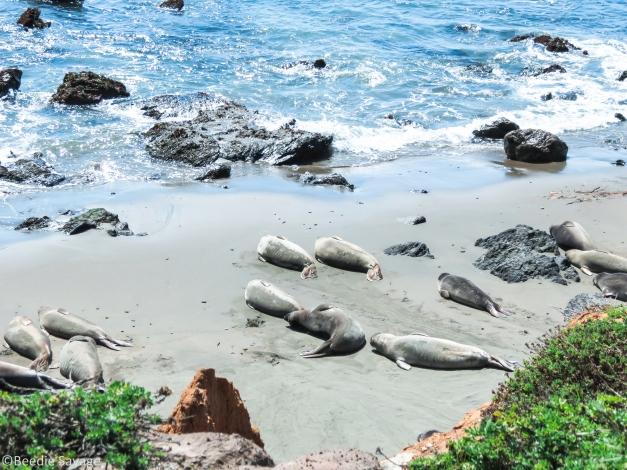Seals Sun Tanning