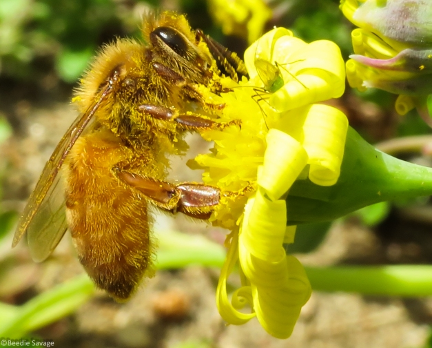 Bee and Lacewing