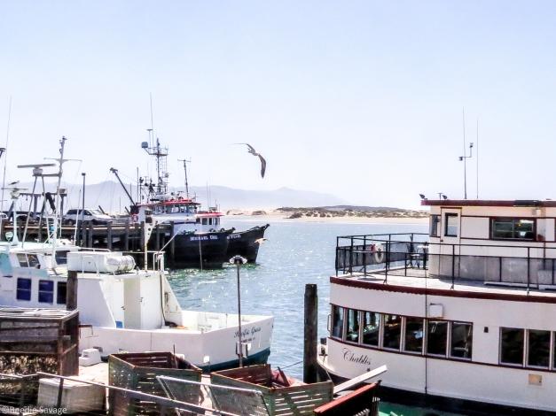 Fishing Port of Morro Bay