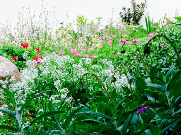 Flower Garden-2