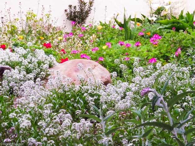Flower Garden-3