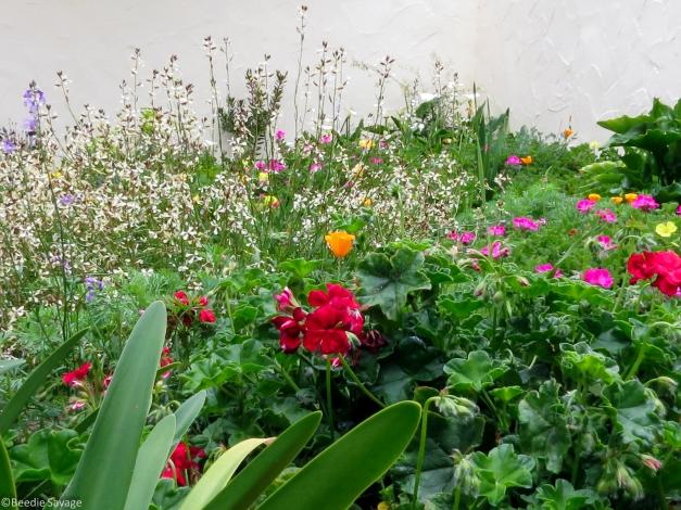 Flower Garden-4