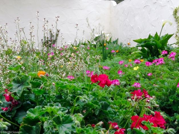 Flower Garden-5