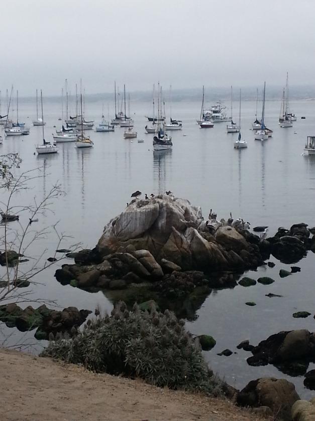 Bird Rock in Monterey Bay