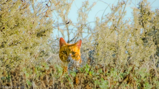 Kitty in Brush