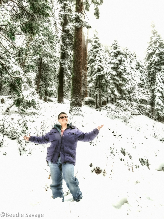 Yosemite National Forrest