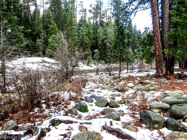 Yosemite Snowy Landscape