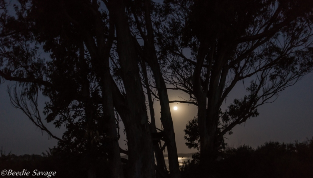 Moonset on the back bay