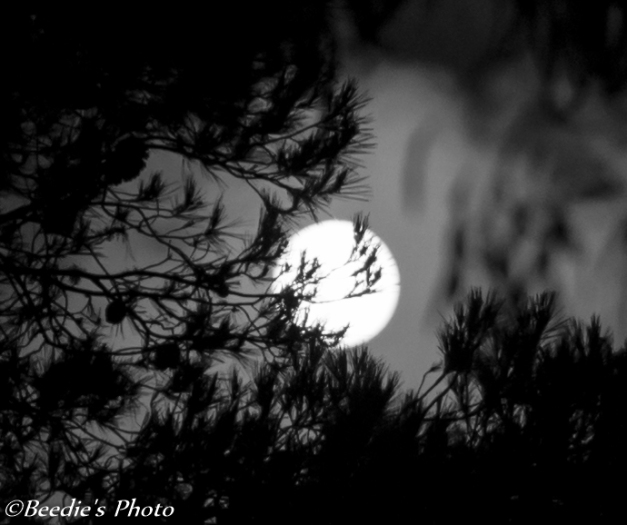 Super Moon August 2014 Black and White